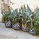 Spotted potted! by Barbara Caffell