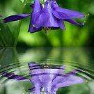 Reflection by anatol734