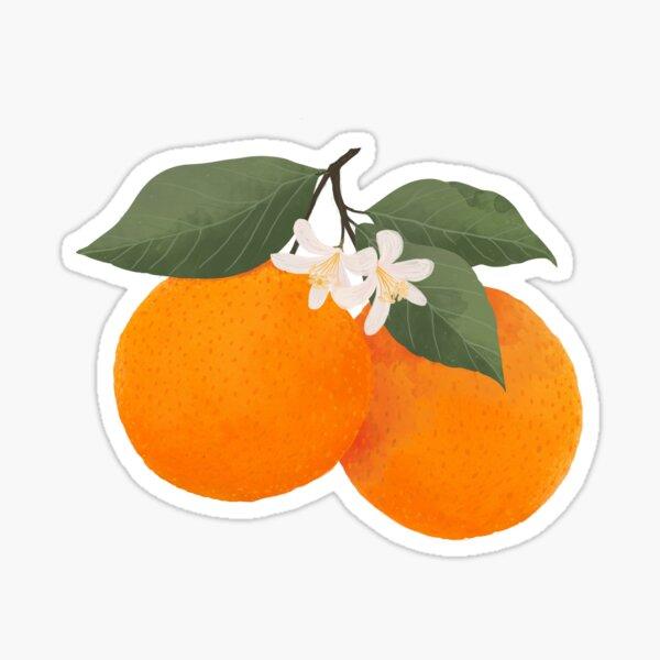 fresh citrus Sticker