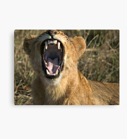 Hey Doc, Can you please check my front molar? Canvas Print
