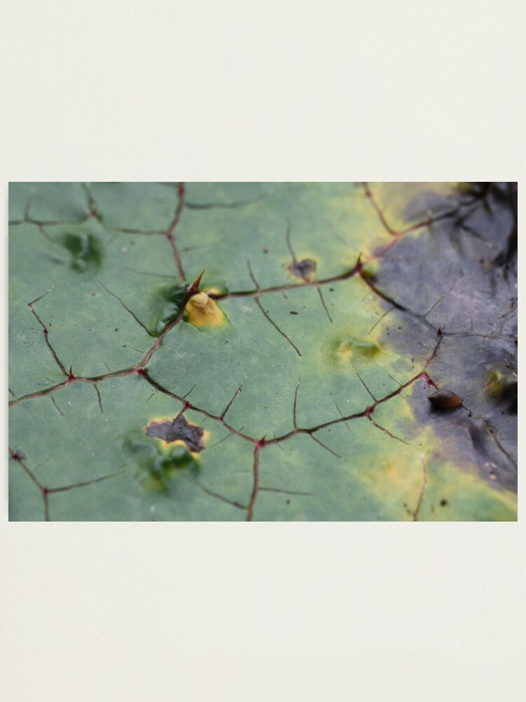Alternate view of drifted leaf Photographic Print