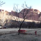 Fruita Campground, Capitol Reef NP by whittie011