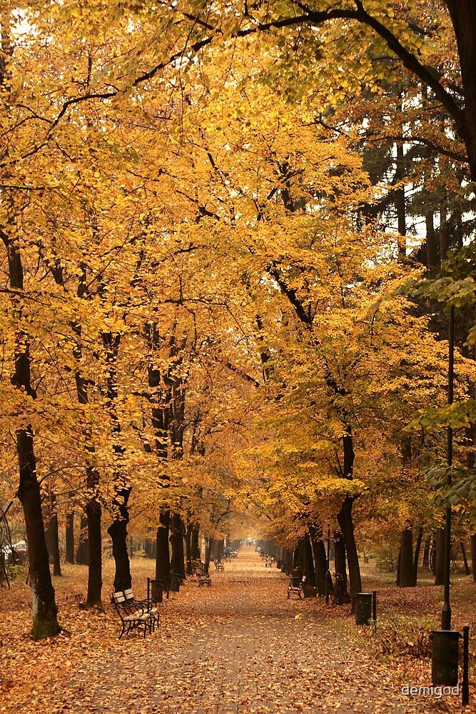 Autumn park alley. by demigod