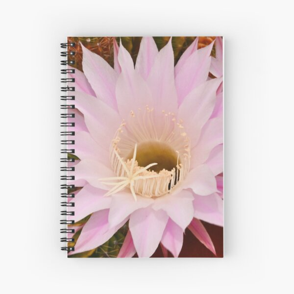 Cactus Flower in the Backyard Spiral Notebook