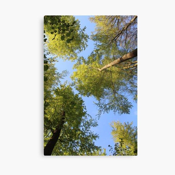 Im grünen Wald Leinwanddruck