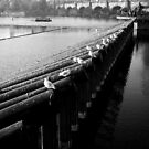 Prague Birds by sephoto