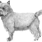 Cairn terrier by doggyshop