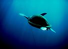 Turtle, Tenerife by colourfreestyle