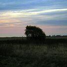 Lone Tree by Brian Gaynor