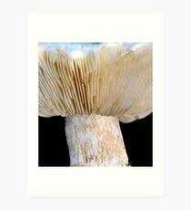 Fleecy Milk-cap Fungi Art Print