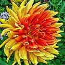 Garden Delight by copperhead