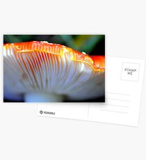 Fly Agaric fungi detail Postcards