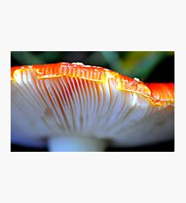 Fly Agaric fungi detail Photographic Print