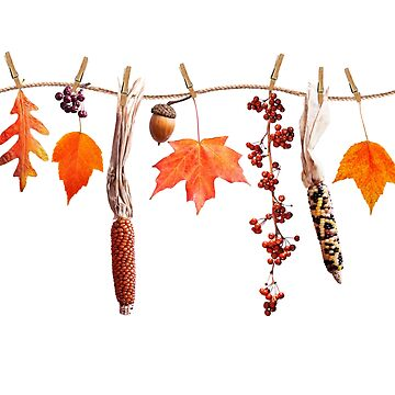colorful autumn leaves berries and seeds arrangement isolated on white background by svetlanna