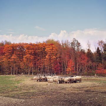 Colorful autumn trees  in a sheep farm  by svetlanna