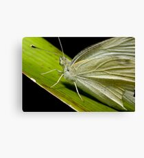 Green Butterfly macro Canvas Print