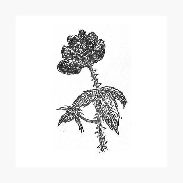 Prickly (Inktober 2018 #25) Photographic Print
