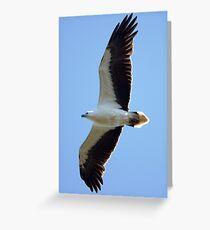 Australian Sea-Eagle in flight Greeting Card