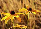Black-eyed Susans by Briana McNair