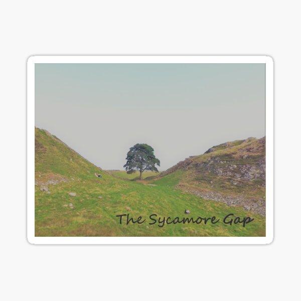 The Sycamore Gap - Hadrians Wall Sticker
