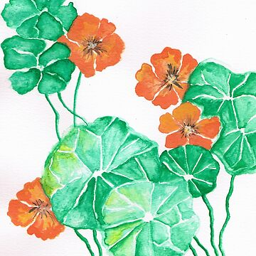 Nasturtiums by Happyart