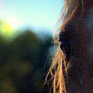 In The Horses Eye by K D Graves Photography