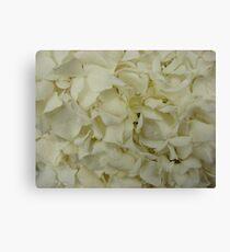 White Hydrangea-(Floral Macro) Canvas Print