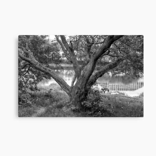 Lovely Thickset Tree Canvas Print