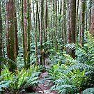 Fern Glade near Westmoreland Falls by Christine Beswick