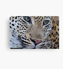 Leopard close up Canvas Print