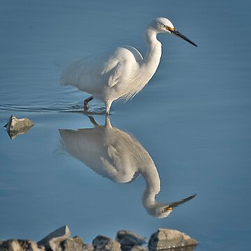 Little Egret with reflection by baji