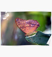 One Lovely Cruiser Butterfly Poster