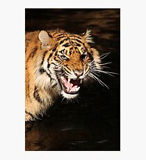 Tiger: Annoyance Photographic Print