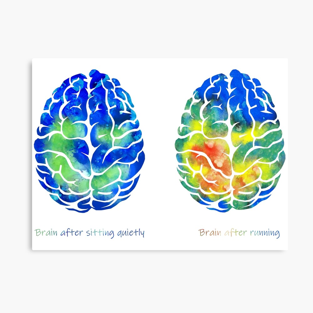 Brain after sitting quietly, brain after running, brain and running, brain and sitting Canvas Print