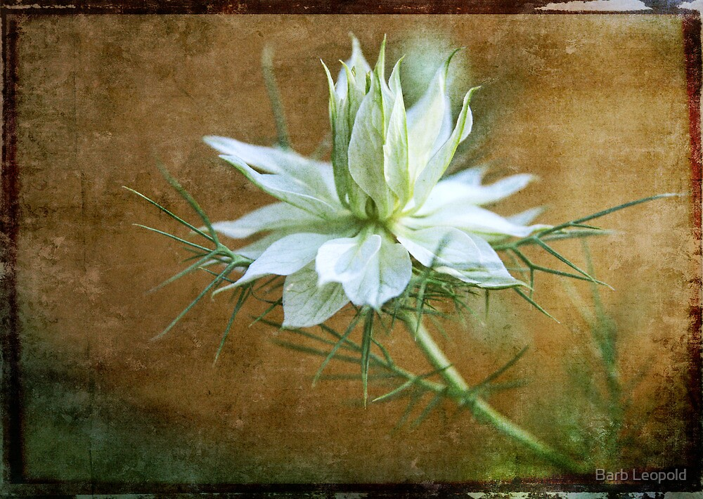 Love in a Mist, with Texture by Barb Leopold