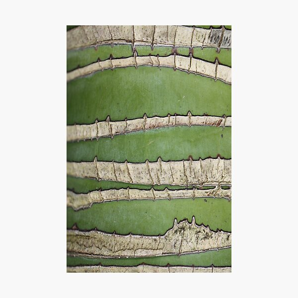Green lines Photographic Print