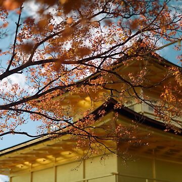 Rokuon-ji Temple of the Golden Pavilion behind red autumn maple tree leaves art photo print by AwenArtPrints