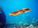 Cuttle Fish by colourfreestyle