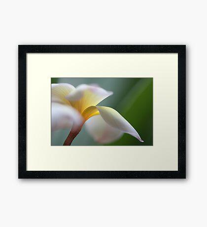 windy flower Framed Print