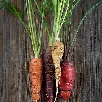 Organic heirloom carrots in a variety of colors artistic still life on wood background art photo print by AwenArtPrints