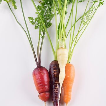 Organic home-grown heirloom carrots in different colors still life isolated on white art photo print by AwenArtPrints