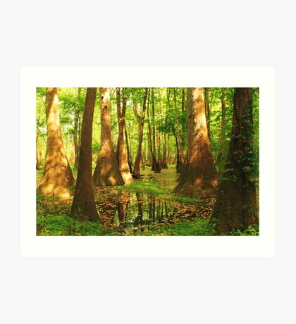 Summer Swamp Art Print