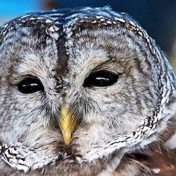 Soulful Eyes by debop