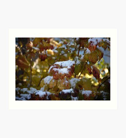 Leaves Snow Art Print