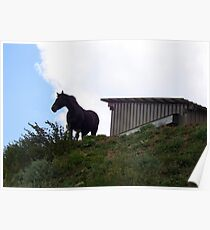Gorgeous horse Poster
