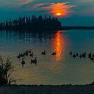 Evening Swim by Sylvia Labelle