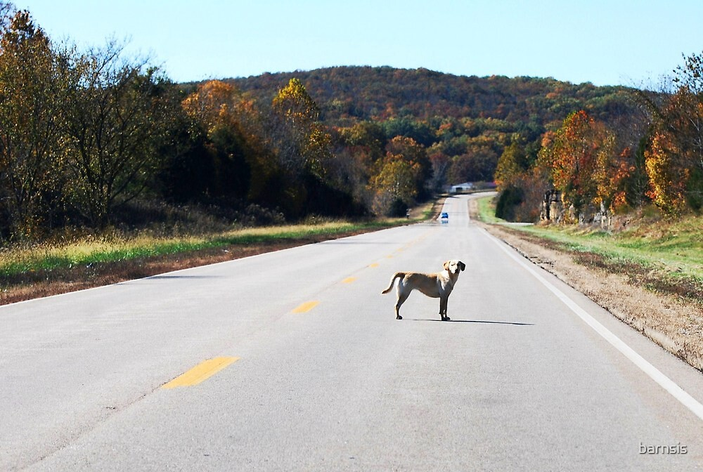 Get Out of the Road Dog! by barnsis