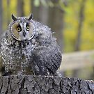 The Biggest Owl of All by Lin Miller