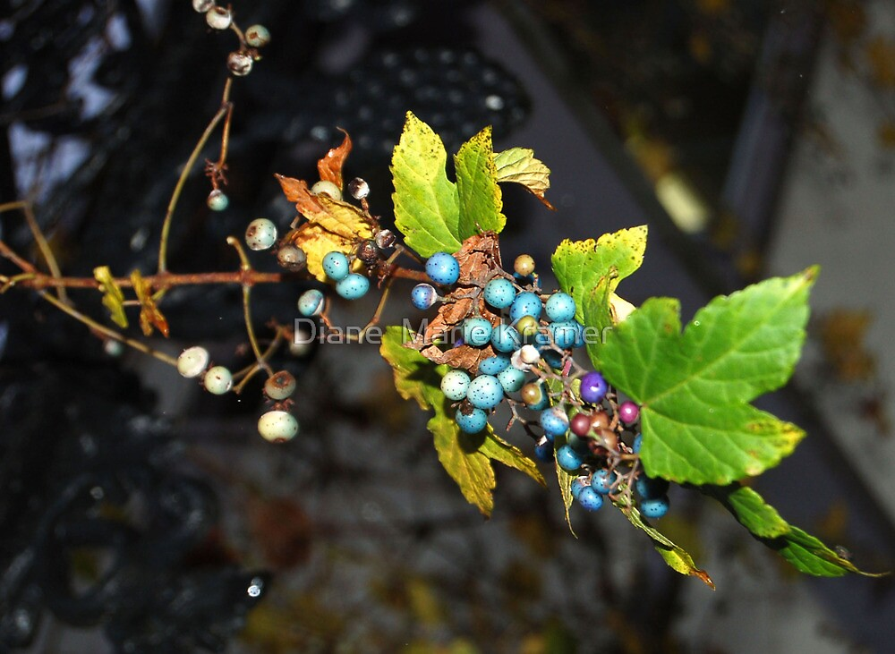 Wild grapes by Diane  Marie Kramer