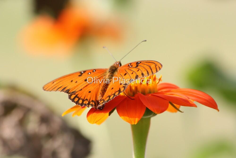 Orange on Orange by Olivia Moore